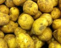 Image for Potatoes - Majorcan New