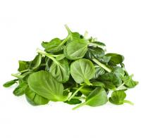 Image for Spinach