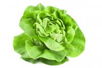 Image for Lettuce - Round